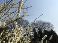 春ですね~ ♪ヾ(@^▽^@)ノ